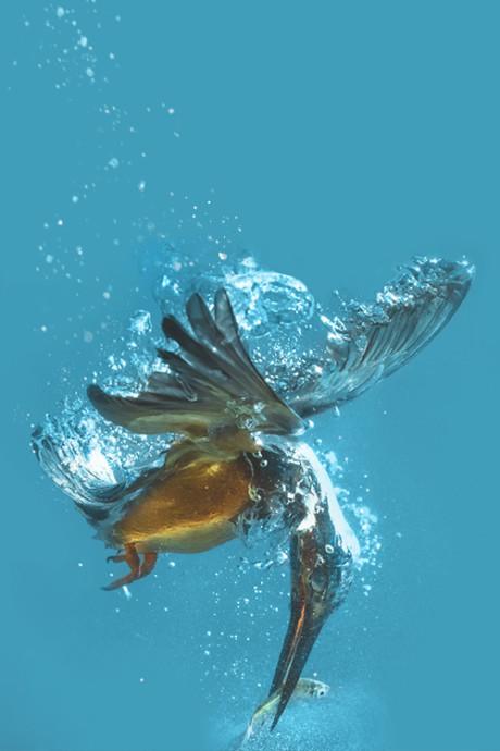 Let's Dive In Together.