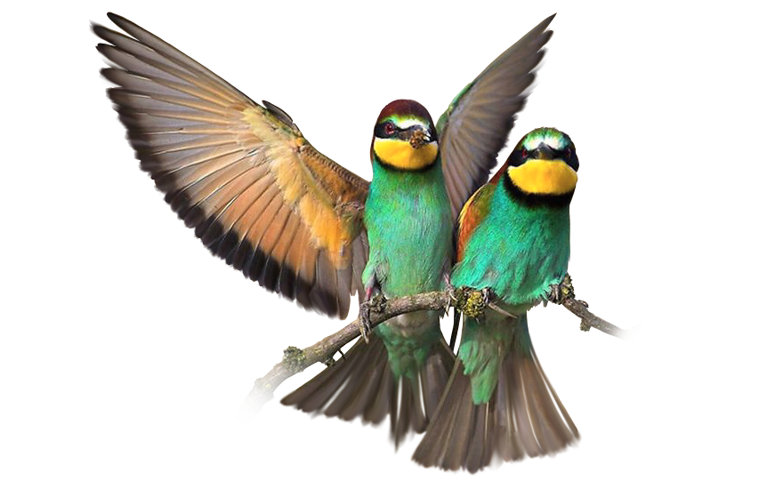 Couples Therapy bird image